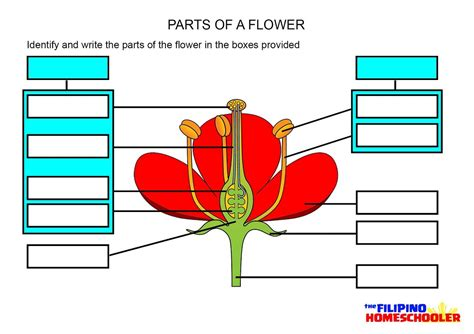 diagram of parts of a flower diagrams diagram site