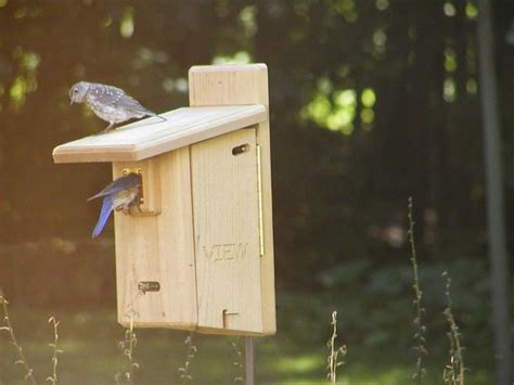 cedar ultimate bluebird house birds choice