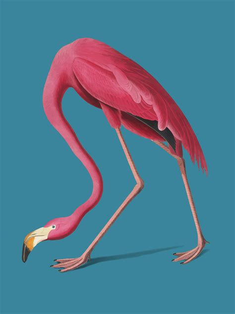pink flamingo illustration   vectors