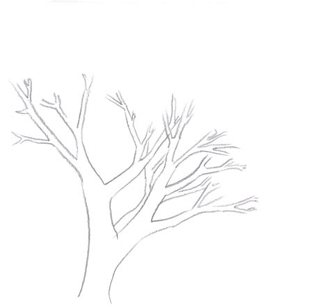 draw a tree how to draw a tree draw central