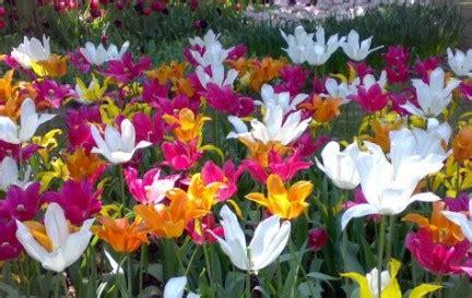 sognare fiori gialli fiori nei sogni