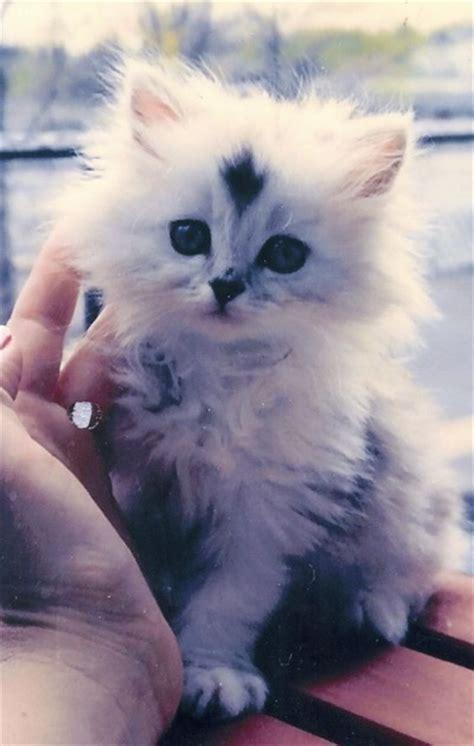 beautiful kittens beautiful kitten 3rd june 2016 we cats and kittens