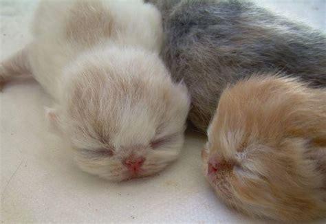imagenes animales recien nacidos imagenes de gatitos con frases part 34