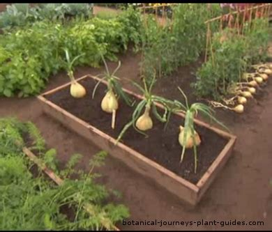 benefits of planting a raised bed vegetable garden easy food