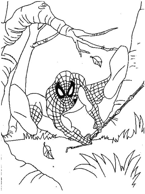 Spider Girl And Hulk Coloring Pages Zoo Animal Org Grig3 Spiderman Coloringpagesabc Com