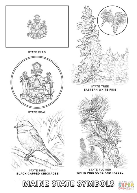 maine state symbols coloring page free printable
