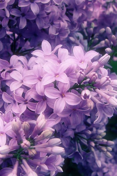 sea  purple flowers wallpaper allwallpaperin