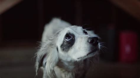 honda steals subarus shtick  emotional dog commercial