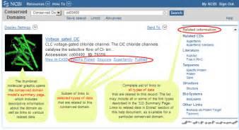 ncbi conserved domain  cdd