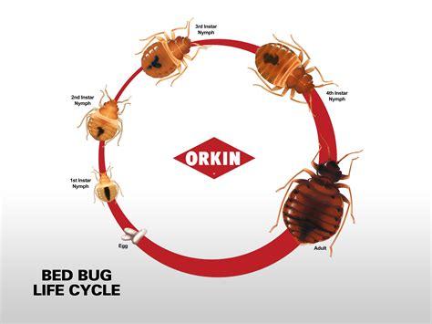 bed bug control des moines iowa miller pest control