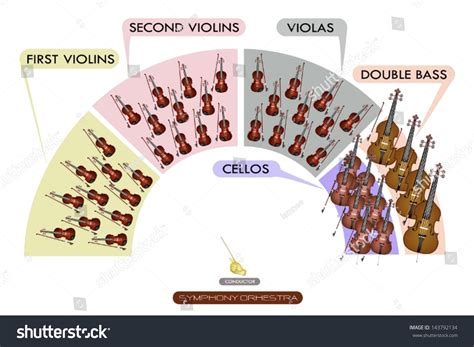 sections of the orchestra illustration collection of different sections of string