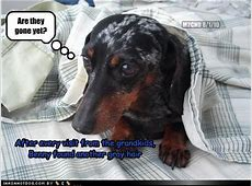 Funny Dog Quotes About Grandparents. QuotesGram Grandfathers