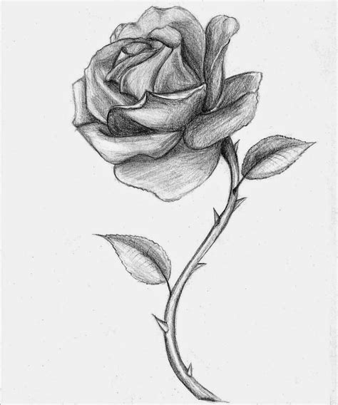 Drawing Roses by Drawing The All Image