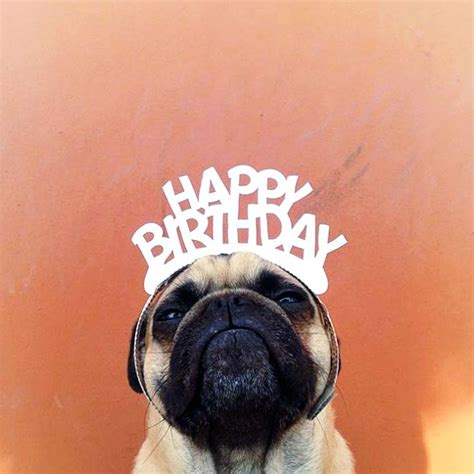 happy birthday with pugs happy birthday by norm the pug the playroom by mdb
