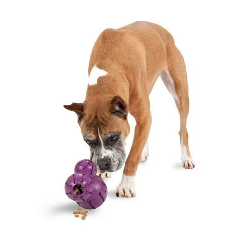 busy toys for dogs busy buddy barnacle treat dispensing