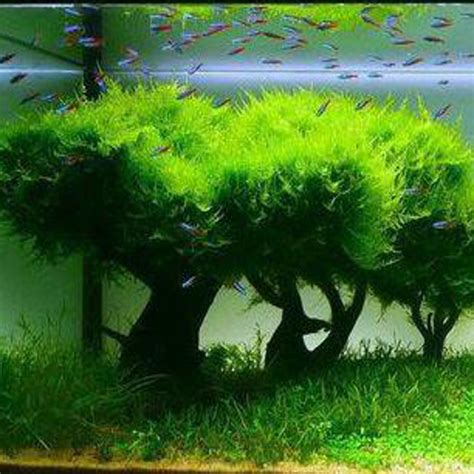 aquascape products aquascape products