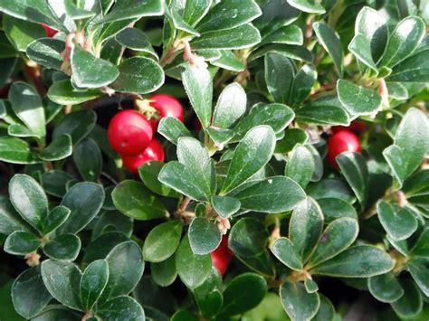 species name wshg net scientific names of plants demystified featured gardeners corner