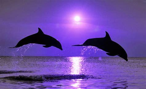 imagenes para fondo de pantalla delfines fondo pantalla delfines saltando