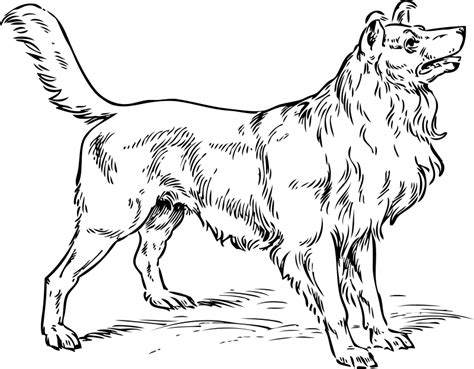 coloring pages of collie dogs collie coloring page coloring pages org
