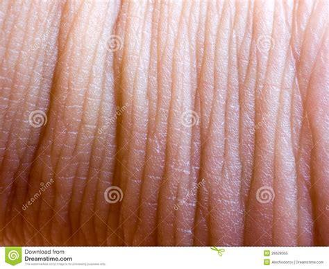 up human skin macro epidermis royalty free stock photo image 36429395 human skin closeup background royalty free stock photo image 26628355