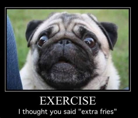Pug Memes - 15 pug memes that ll leave you howling with laughter ymbnews
