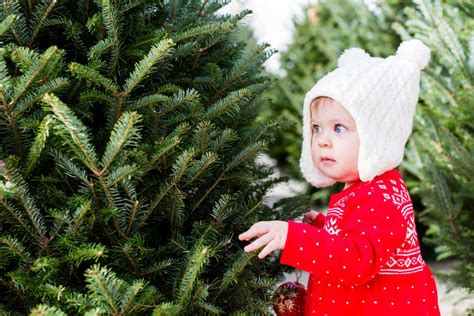 where to buy real christmas trees around edmonton