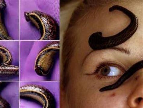 leech facial treatment leech therapy on face www pixshark com images
