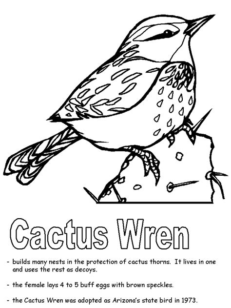 Cactus Wren Coloring Page Arizona Coloring Page