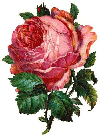 Cabbages Roses New Website by Free Clip Vintage Roses Vintage Crafts