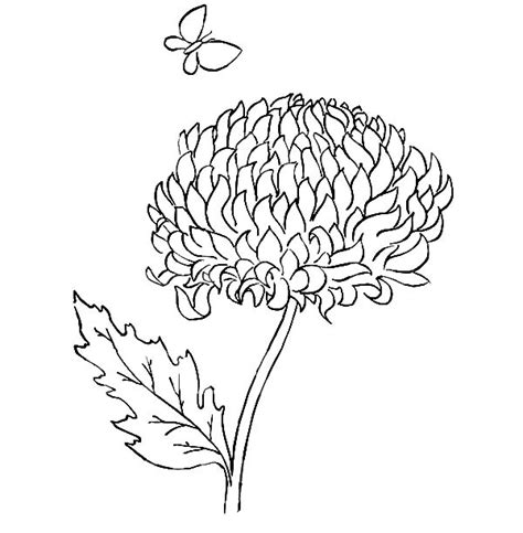 mums colouring book of chrysanthemum coloring pages murderthestout