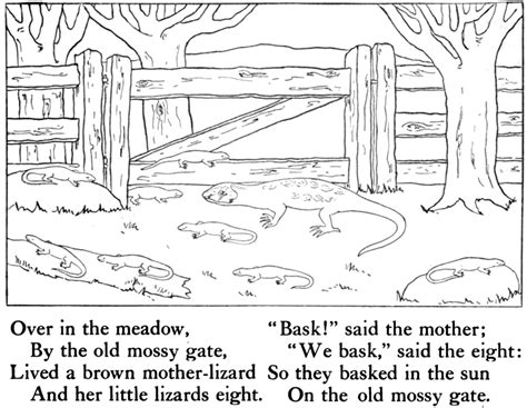 baby lizard coloring page mother lizard and baby lizards basking in the sun on the