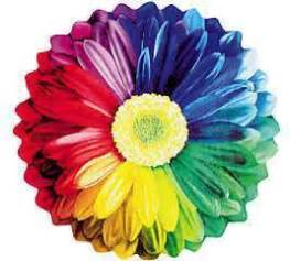 color flower brightly colored flower bright colors image 18658345