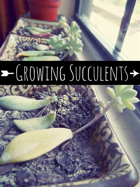 with sarahb how to grow succulents