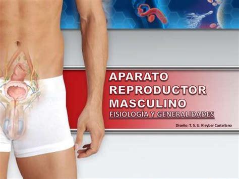 aparato reproductor masculino aparato reproductor masculino fisiolog 237 a y generalidades