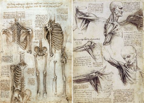 leonardo da vinci the anatomical artist drawing