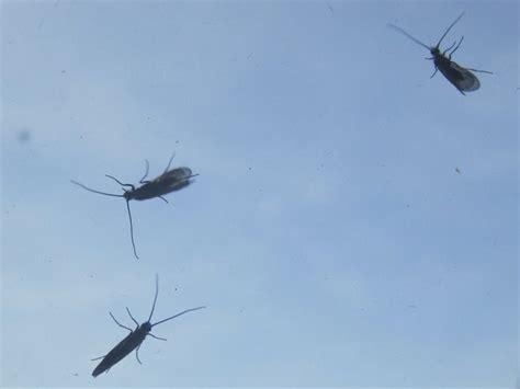 ameisen in der wohnung bekämpfen insekten plage im zentrum augsburg was sind das f 252 r