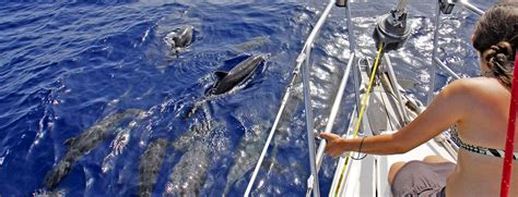 boat trips from playa del ingles to puerto mogan dolphin spotting excursions in gran canaria the canaries