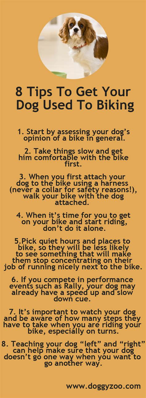 how to get your dog to use the bathroom outside 8 tips to get your dog used to biking doggyzoo