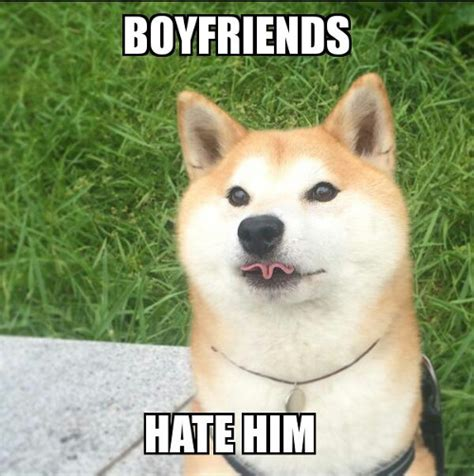 Shiba Inu Memes - shiba inu dog related keywords suggestions shiba inu