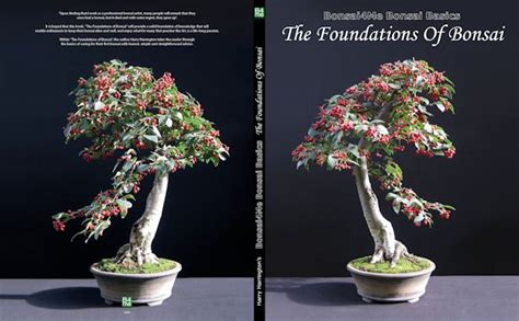 bonsai book bonsai basics the foundations of bonsai
