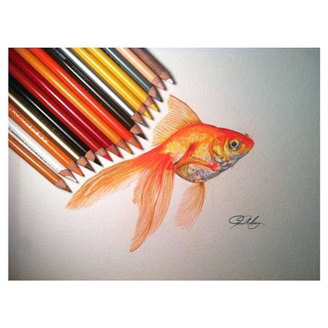 gold color pencil gallery for gt gold fish drawing in pencil drawing