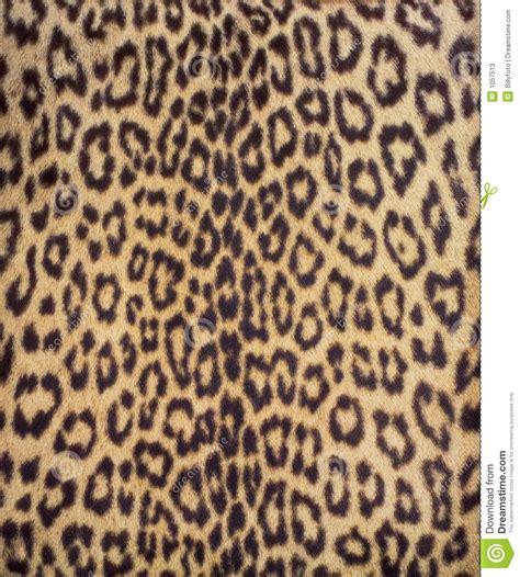 imagenes uñas animal print piel 3 del leopardo fotos de archivo imagen 1057513