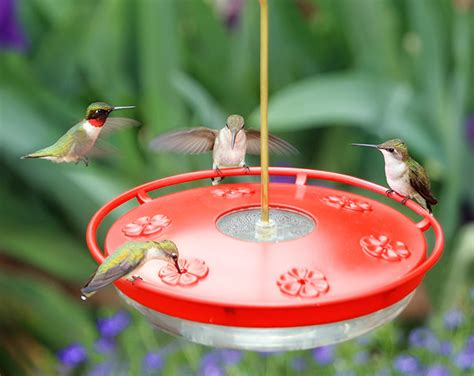 7 benefits of using dish hummingbird feeders slideshow