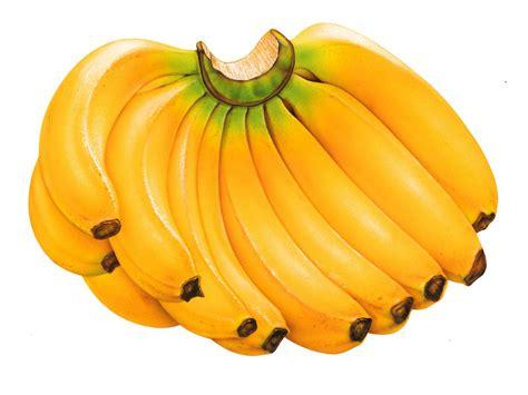 The Bananas two bananas a day keep the doctor away enjoying