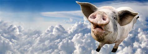 cute flying pig MEMEs