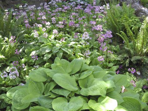 garten gestalten halbschatten schattengarten ideen zur bepflanzung gartengestaltung