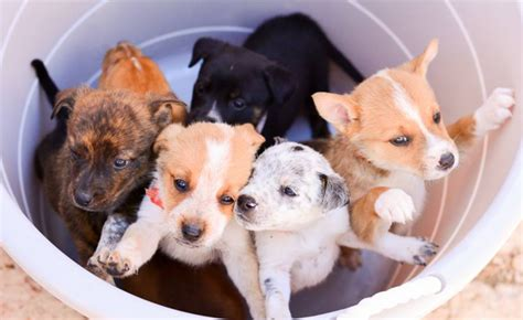 denver puppy rescue two words puppy brunch the from the denver post