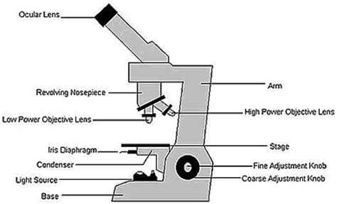 Condenser Adjustment Knob by Light Microscope Definition Uses Parts