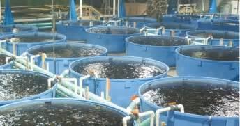 Backyard Tilapia Save Bantry Bay No More Salmon Farms In Bantry Bay