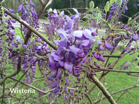 top 20 fragrant flowers and plants for your garden